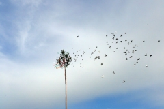 vypustanie-holubov2