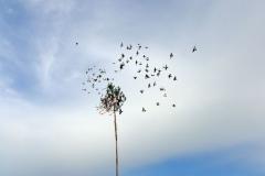 vypustanie-holubov3